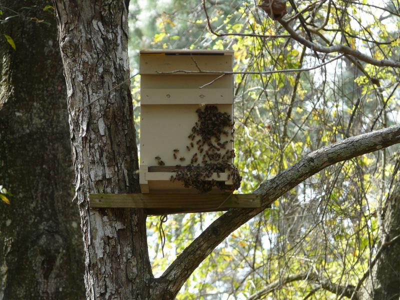 Размещение ловушки на дереве