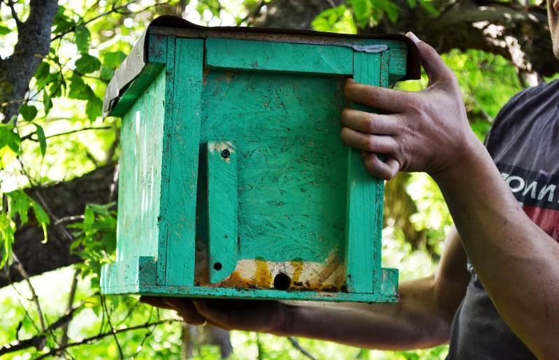 Транспортировка ловушки с пчелами