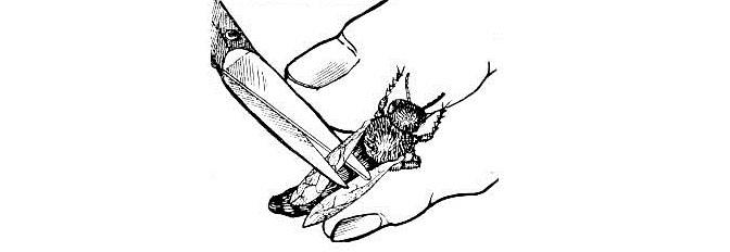 Подрезание крыльев