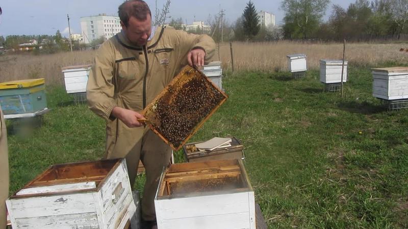 Летнее переселение пчел
