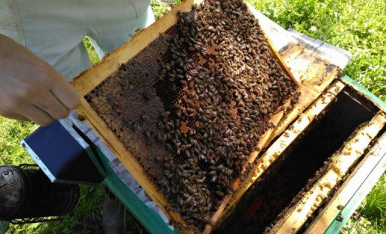Пересадка из пчелопакета