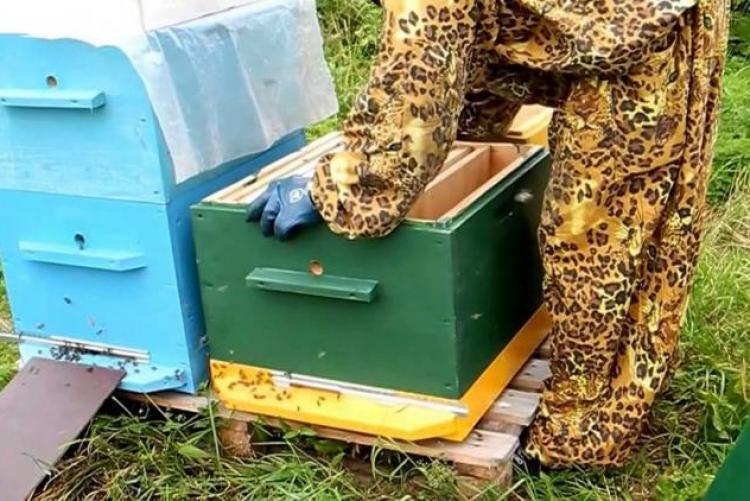 Процесс пересадки пчел
