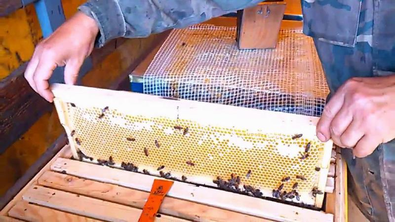 Сбор мёда