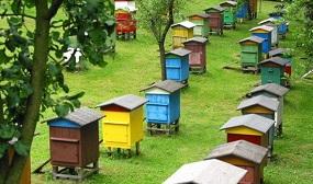 Виды ульев для пчел