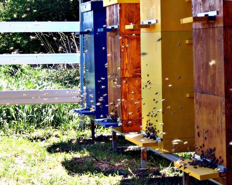 Содержание пчел