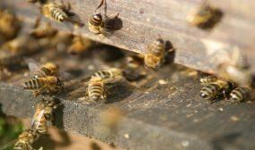 содержание пчел в многокорпусных ульях