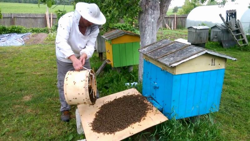 Возврат пчел в улей