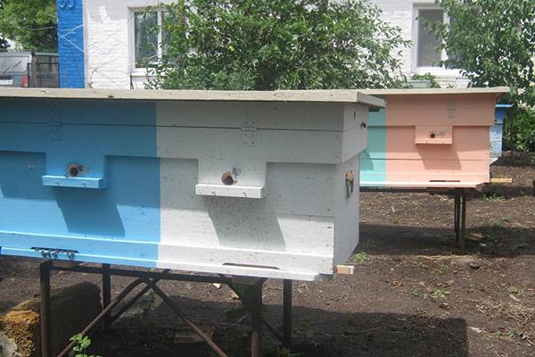 Лежаки для пчел