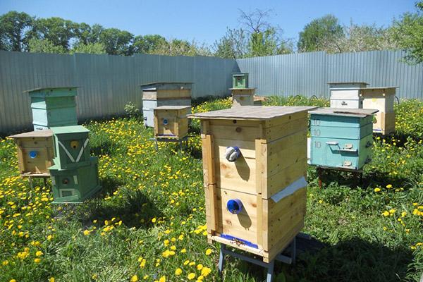 Преимущества содержания пчел