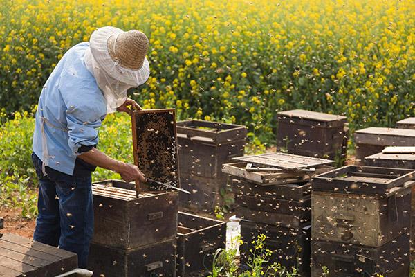Традиционное пчеловодство