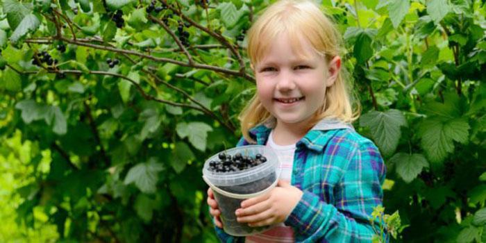 Дети любят кушать черную смородину