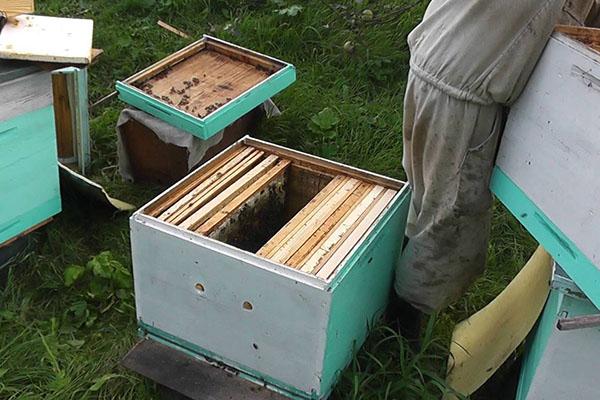 Несколько пчелосемей в одном улье