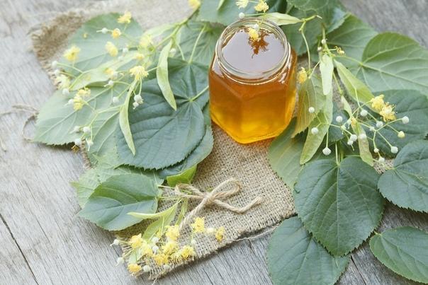 Мед и липовый цвет при ангине