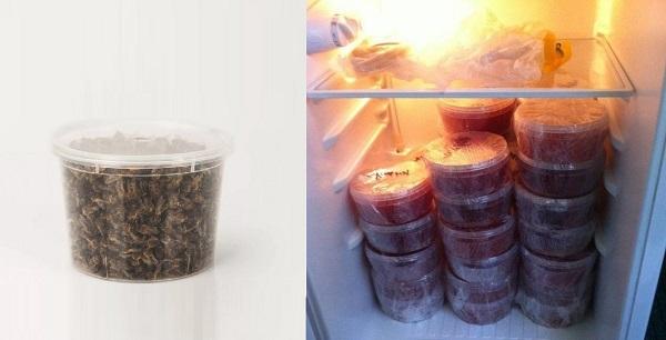Хранение подмора в холодильнике
