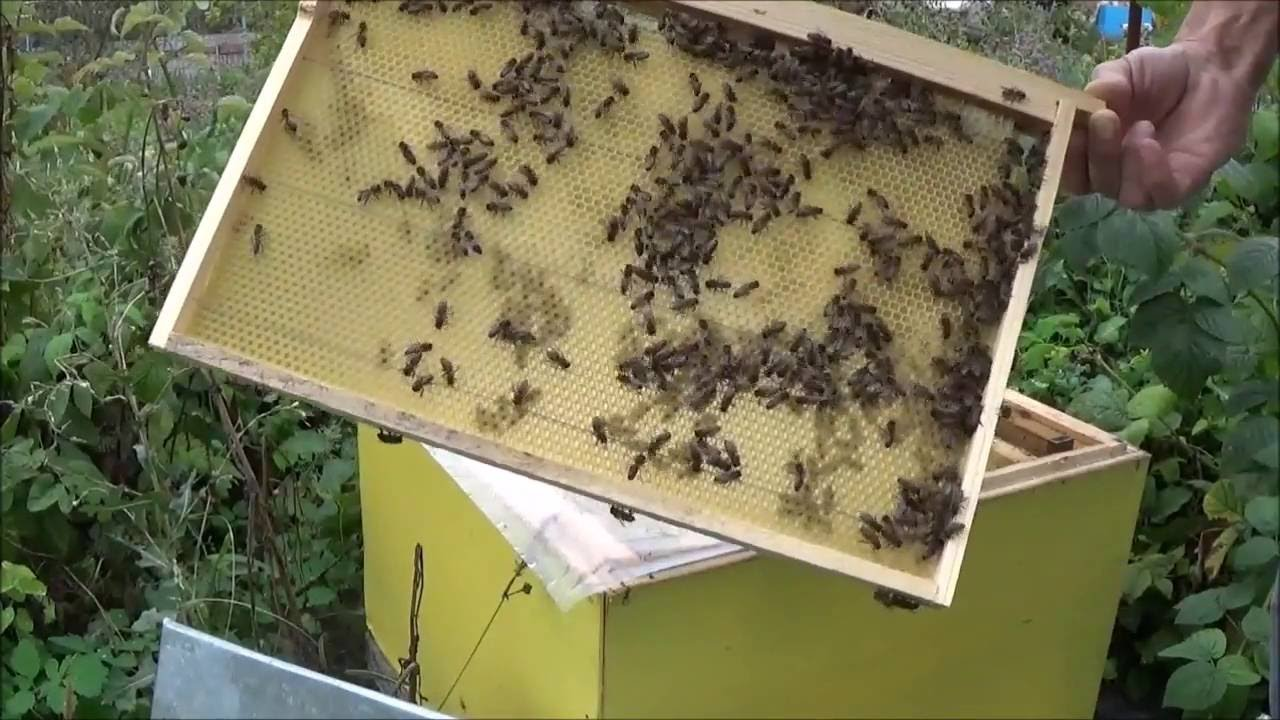 Отстройка вощины пчелами