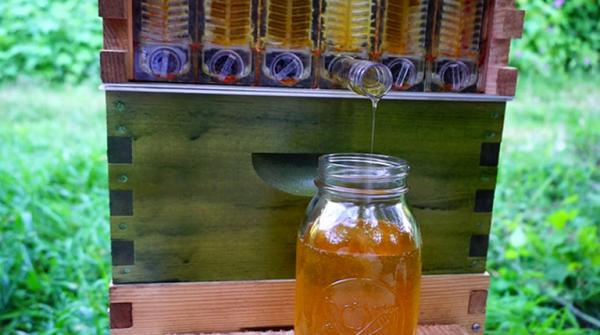 Мед с улья