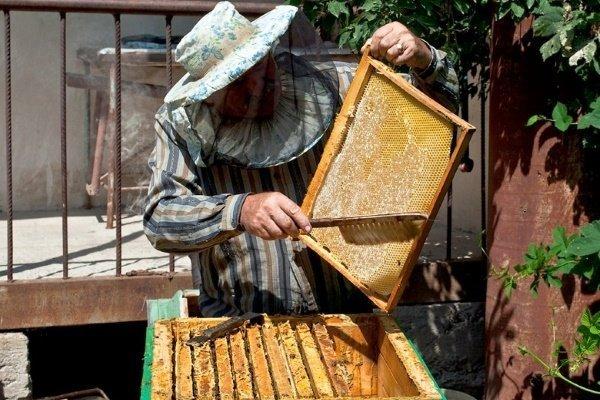 Медовые рамки