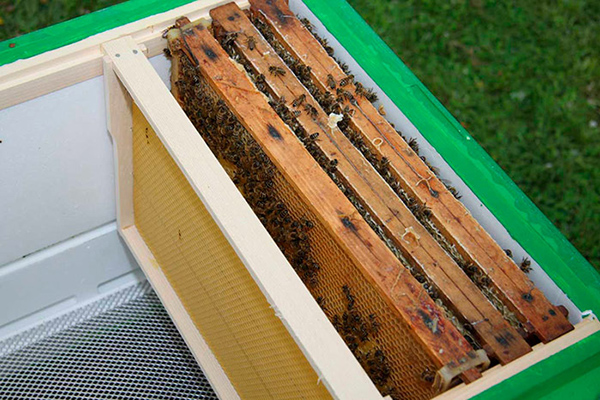 Пчелиный отводок