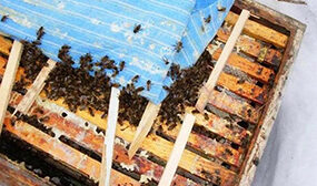Как сделать отводок пчел самым простым способом