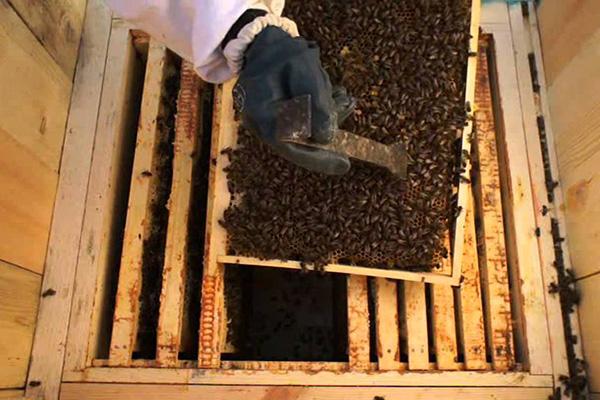 Работа с пчелами