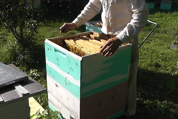 Пчеловождение по методу Цебро