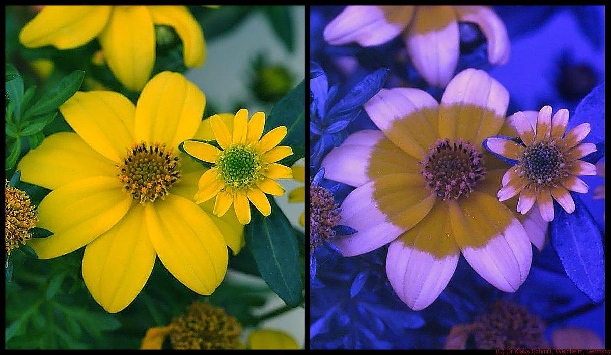 Отличие цветового восприятия