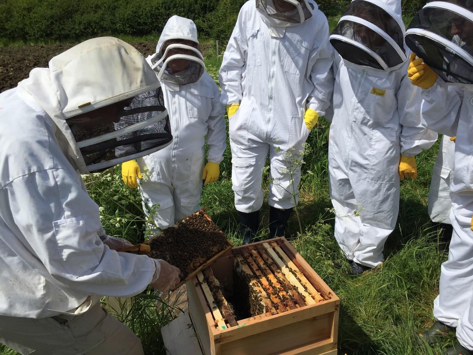 Ученые-пчеловоды