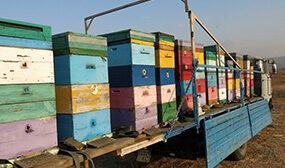 Как перевозить пчел
