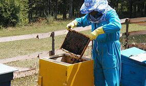 Обработка пчел муравьиной кислотой