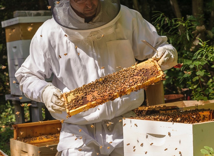Пчеловод с рамкой в руках