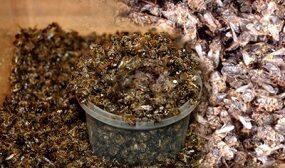 как сушить пчелиный подмор
