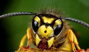 Злые пчелы - что делать
