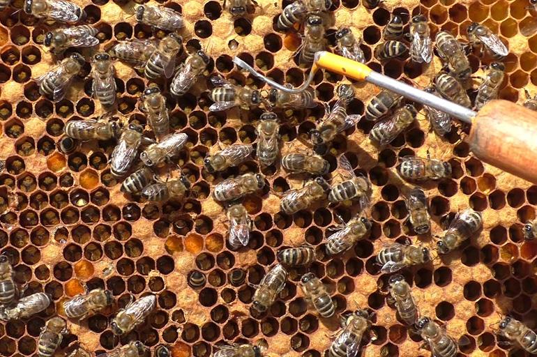 Исследование пчел