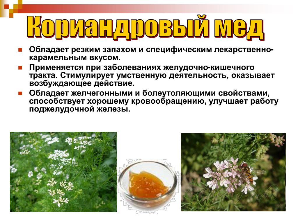 Полезные свойства кориандрового меда