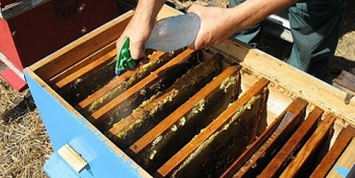Опрыскивание пчел и сот водным раствором с бальзамом