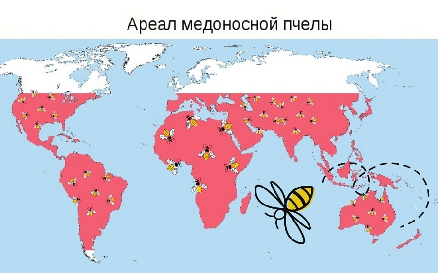 Ареал обитания пчелы