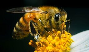 Значение пчел в природе и жизни человека
