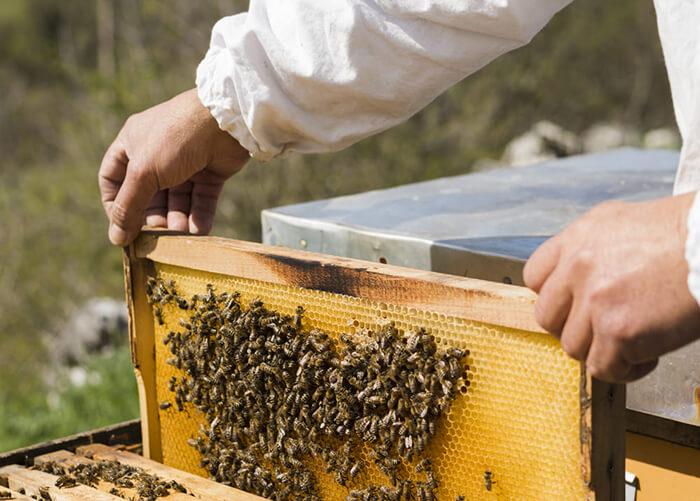 Мед на пасеке