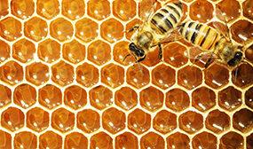 Из чего делают пчелы соты